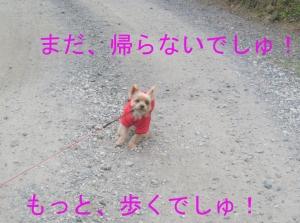 Img_43421_2