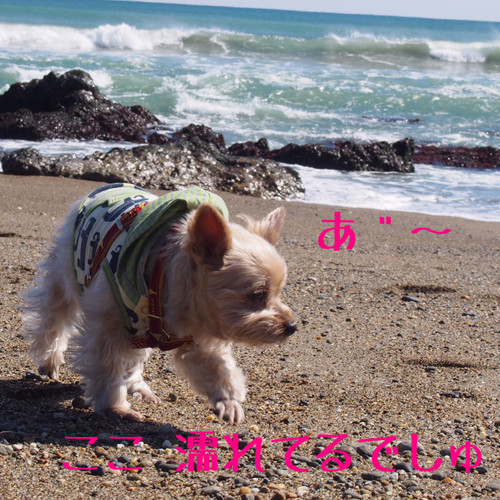 Image_2